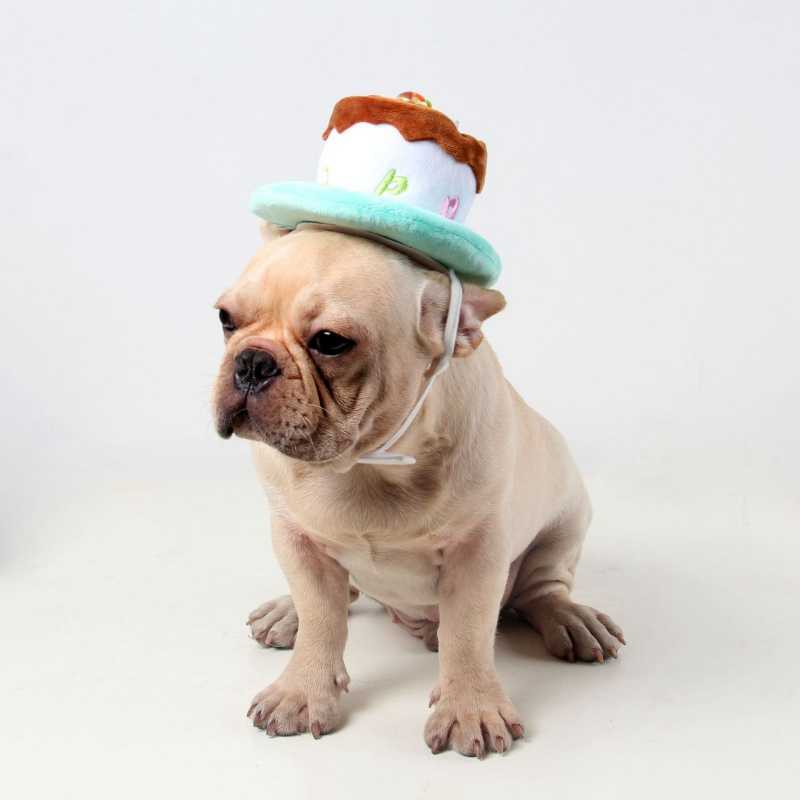 Outstanding Dog Hat Pet Dog Cat Hat With Birthday Cake Cap Candle T Design Personalised Birthday Cards Paralily Jamesorg