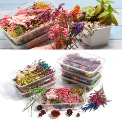 1 Box Colorful Real Dried Flower Plant Aromatherapy Candle Epoxy Resin Molds For DIY Jewelry Making Nail Art Decals Pendant