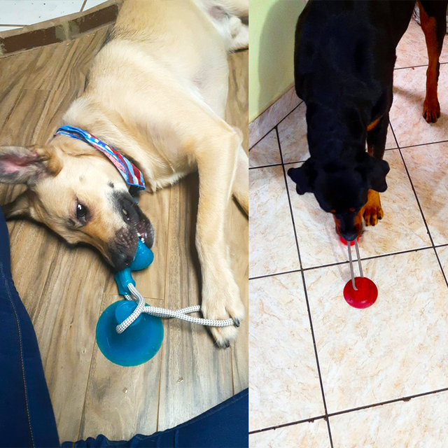 Brinquedos para cães de estimação filhote de cachorro interativo ventosa empurrar tpr bola brinquedos molar mordida brinquedo cordas elásticas limpeza do dente do cão suprimentos de mastigação 5