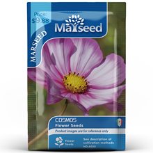 American Heirloom MARSEED Cosmos Flower  Seedsplants Seedling Garden Outdoor