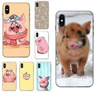 Funny Animal Pig For...
