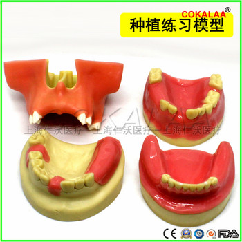 1pcs Good quality Dental materials dental model oral implant surgery maxillary sinus dental supplies equipment tools soft gums image
