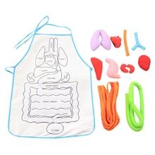 Anatomy Apron Human Body Organs Educational Insights Apron Toys Preschool Home Teaching Aids For Children Kids Useful