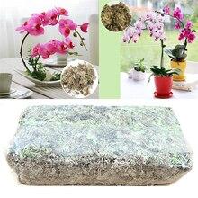 12L Sphagnum Moss Nutrition Organic Fertilizer For Orchid Phalaenopsis Musgo Sphagnum Flower Home Garden Supplies Tools