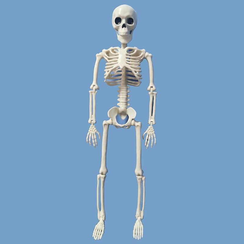 Image 2 - 5 Pcs Human Anatomy Skeleton Skeleton Model Medical Medicine Learning Aid Anatomy 1 Pair Skull Skeleton Hand Bone HalloweenMedical Science   -