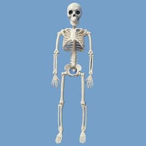 Image 2 - 5 Pcs Human Anatomy Skeleton Skeleton Model Medical Medicine Learning Aid Anatomy 1 Pair Skull Skeleton Hand Bone Halloween