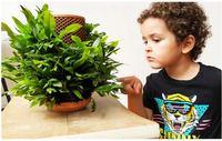 Terraplanter Maceta de cerámica de riego automático para flores, maceta de cerámica con forma de panal, para flores