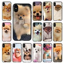 Pomeranian dogs dog cute Soft Silicone TPU Phone Cover For Apple iPhone 11 8 7 6 6S Plus X XS MAX 5 5S SE XR 11 pro Cover Shell(China)