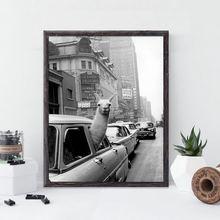 ВИНТАЖНЫЙ ПЛАКАТ с ламой черно белая альпака в такси холст искусственным