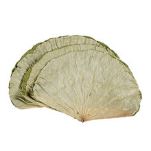15pcs High quality pure natural dried whole dried lotus leaf 18-30cm Raw color