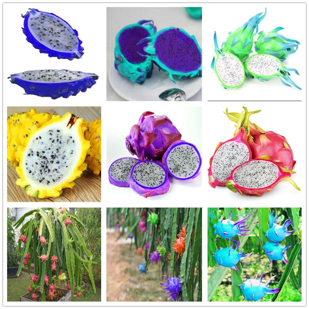 Plant Flower Bath Salts Pitaya Essence 100Pcs XZZ-272