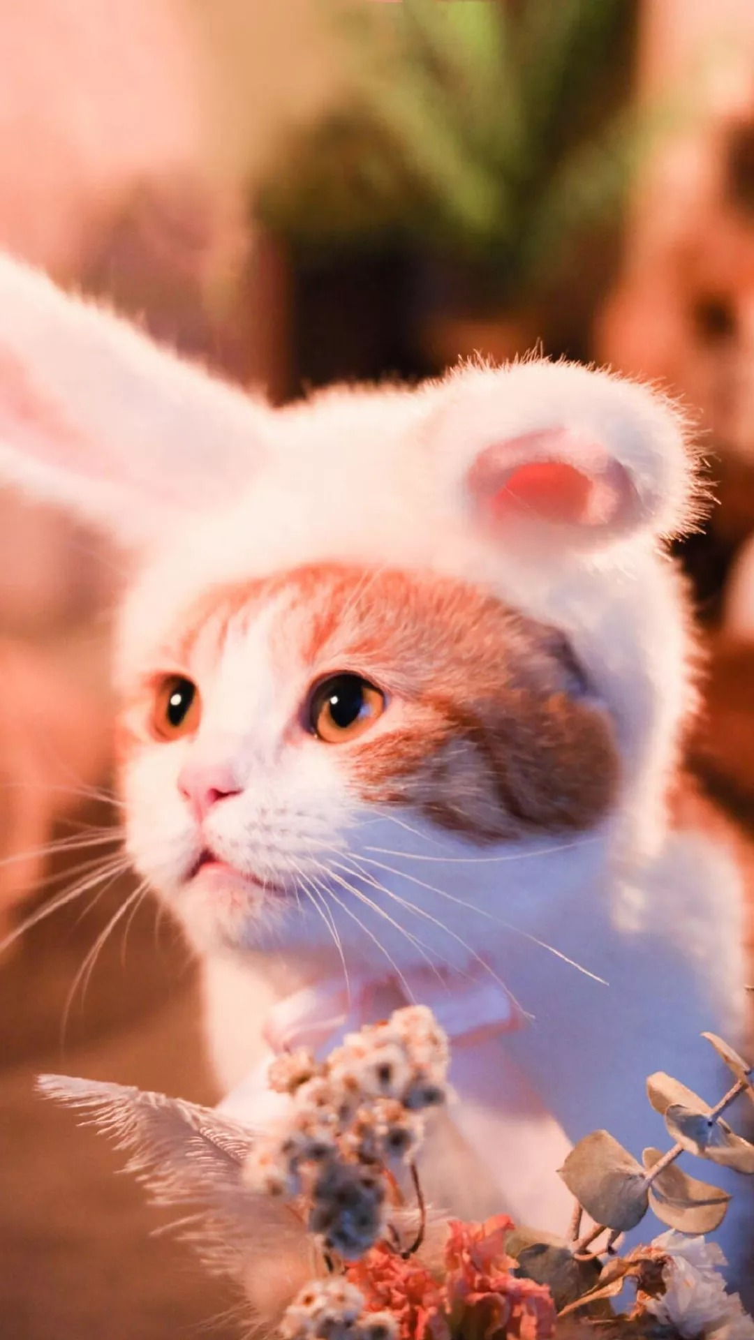 猫片壁纸 :生活不断拍打我们的脸皮,最后不是脸皮厚了,是肿了!插图35