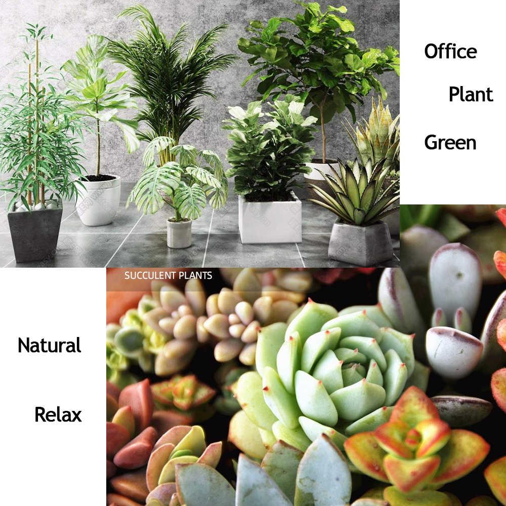 10 g ureia carbamida nitrogênio fertilizante mini pacote verde de uso geral seguro e poluição livre flor planta jardim alimentos