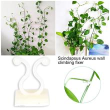 20pcs Vegetable Bush Vine Flower Stem Support Clip Holder Plastic Green Durable