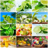 HUACAN Oil Painting By Number Lemon Fruit HandPainted Kits Drawing Canvas DIY Pictures Food Home Decoration Art Gift