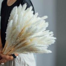15 Uds Secas Naturales Pampas Grass Phragmites Communis Reed boda ramo de Flores Secas Naturales para la decoración de la casa de