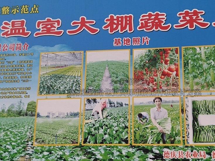 原野佳蔬菜基地蔬菜大棚