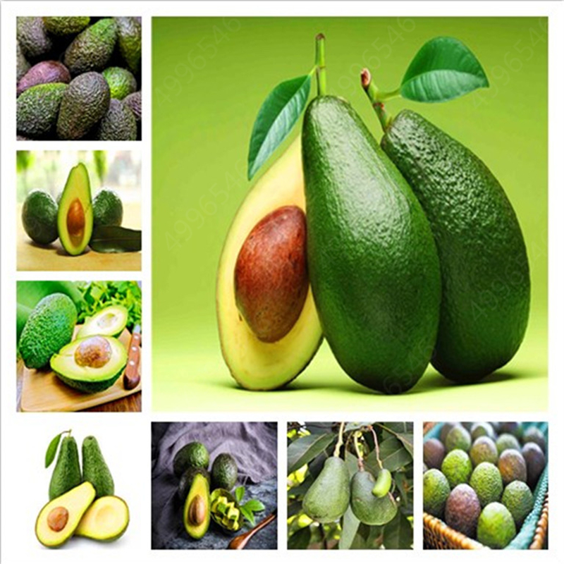 Sale Promotions 2pcs Rare Mini Avocado Plant Delicious Pear Fruit Plant Easy Grow For Home Garden Germ Bonsai