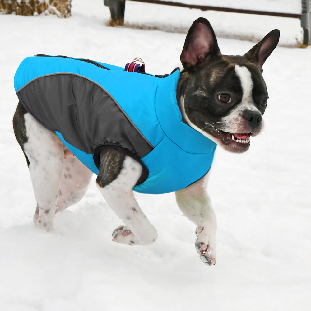 French Bulldog Chihuahua Dog Clothes ...