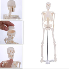 45CM Human Anatomical Anatomy Skeleton Model Medical Wholesale Retail Poster Medical Learn Aid Anatomy human skeletal model цена 2017
