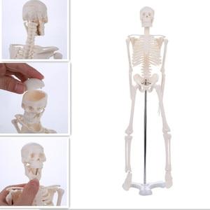 45CM Human Anatomical Anatomy Skeleton Model Medical Wholesale Retail Poster Medical Learn Aid Anatomy human skeletal model(China)
