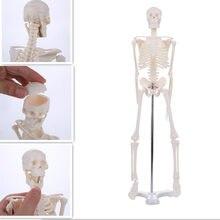 45CM Modelo Anatômico Anatomia Esqueleto Humano Atacado Varejo Cartaz Aprender Ajuda esquelético Anatomia humana modelo