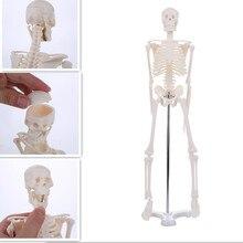 45CM anatomia anatomiczna człowieka Model szkieletu hurt detal plakat dowiedz się pomocy anatomia model szkieletu człowieka