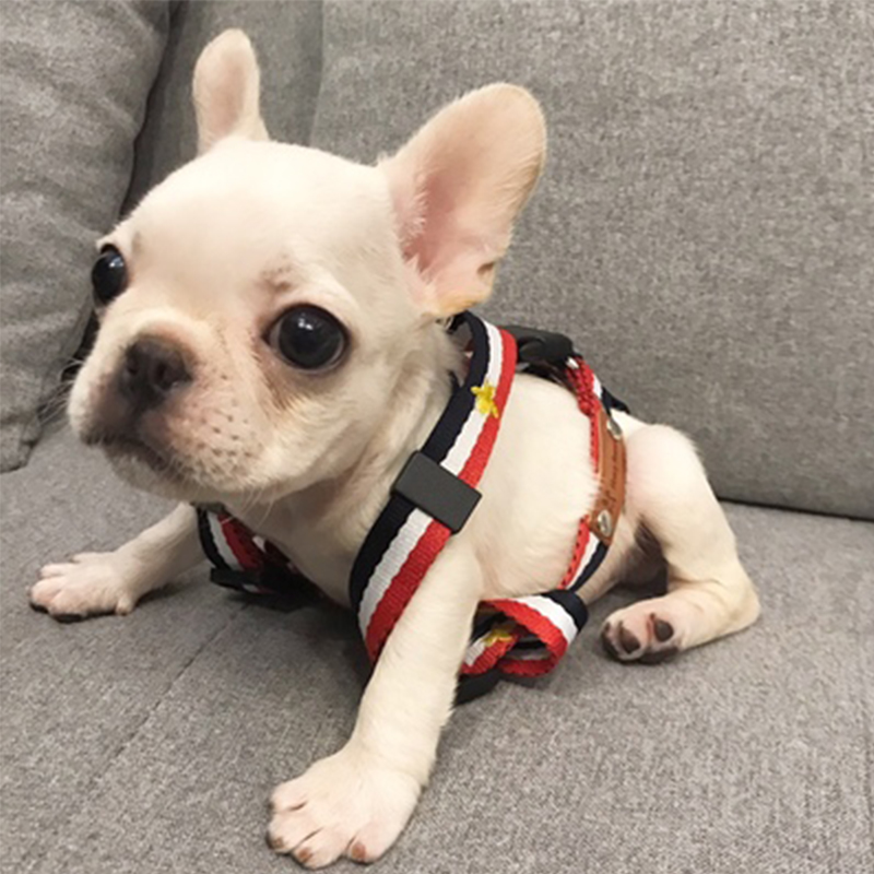 Dog Harness Personalized Chihuahua Pitbull Buldog Puppy Collar Luxury Dog Collar Small Dog Harness For Small Dog Pet Products