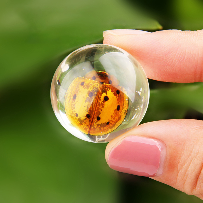 Cute Student Education Real Insect Specimens Clear Resin Amber School Education Children School Teaching Home Decor Collectibles