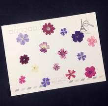 60 sztuk naturalne prasowane suszone mieszane werbena kwiat roślina Herbarium dla biżuterii zakładka z pocztówki przypadku telefonu karta zaproszenie DIY