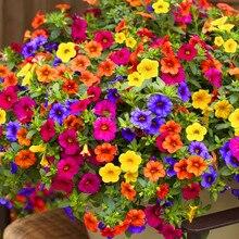 200 шт. Висячие Петуния смешанные цвета Флорес волны Красивые цветы для садовых растений бонсай цветочные плантации,# BJLC4O