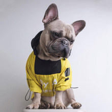 Mode Frenchbulldog Regenjas Hond Kleding voor Kleine Honden Kleding Chihuahua Jas Pug Hoodies Kostuum Dropshipping PC1364(China)