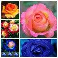 30 graines Rose fleur graines toutes les saisons fleurs fraîches semis balcon intérieur en pot fleur graines en gros rouge rose graine|Bouquets De Mariage|   -