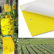 50pcs Strong Fly Traps Bugs Sticky Board Dual-Sided Catching Aphid Insects Pest Control Whitefly Thrip Leafminer Glue Sticker
