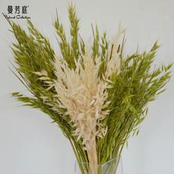 Натуральный пасторальный стиль натуральный завод Белый Овес искусство сушеный цветок сено сохраненные свежими цветок домашняя мебель