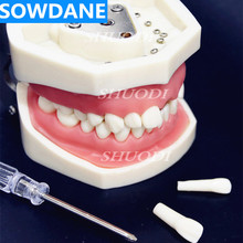 High Quality Model Dental Universal Plate Type Removable Teeth  Soft Gum Study Tooth Model for New Dentist Traning in school 2019 high quality dental sinus lift practice teeth model typodont study model 2013f model