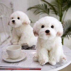 Image 1 - חדש באיכות גבוהה סימולציה מלטזית כלב בפלאש צעצוע רך קריקטורה בעלי החיים כלב ממולא בובת עיצוב הבית תינוק ילד מתנת יום הולדת
