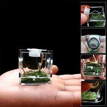 Black Widow Spider Small Insect Breathable Terrarium Transparent Reptile Breeding Box Acrylic Enti's Acrylic Assembled Eco Box