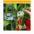 Пластиковые Многоразовые зажимы для растений  50/100 шт.  25 мм  зажимы для растений  подвесных лоз  овощей  теплиц  помидоров