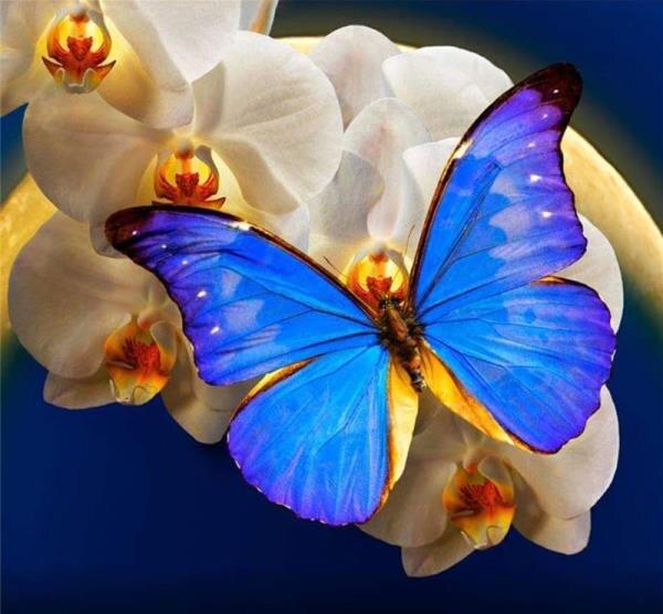 5d DIY Diamond Painting Blue Butterfly Handmade Rhinestone Needlework Diamond Painting Embroidery Cross Stitch Kit Home Decor