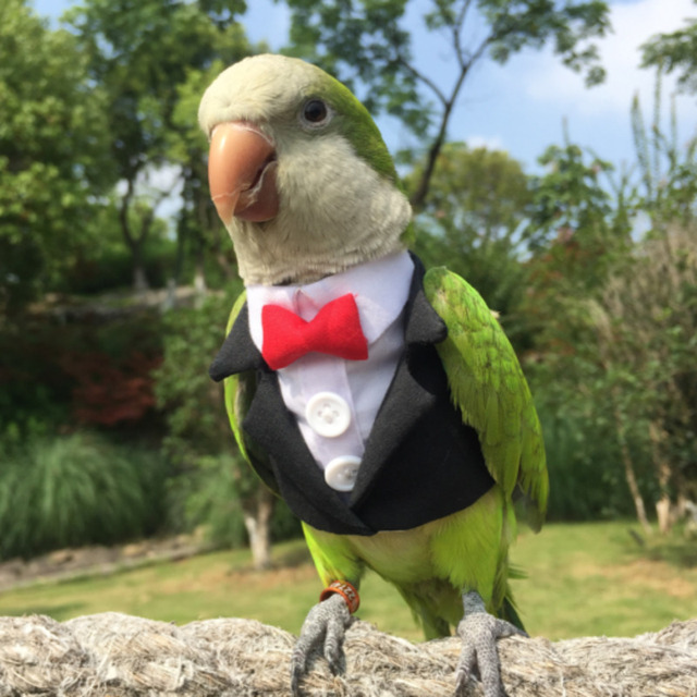 Parrot Cocktail Suit With Snazzy Bowtie  2