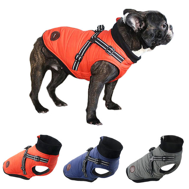 French Bulldog jacket with harness