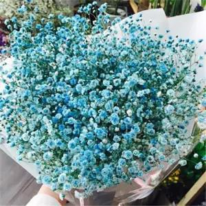 Gypsophila Seeds, Four Seasons, Easy-to-live Flowering, Indoor Balcony Potted Flower Seeds, Flower Grass Seeds 1000 Seeds