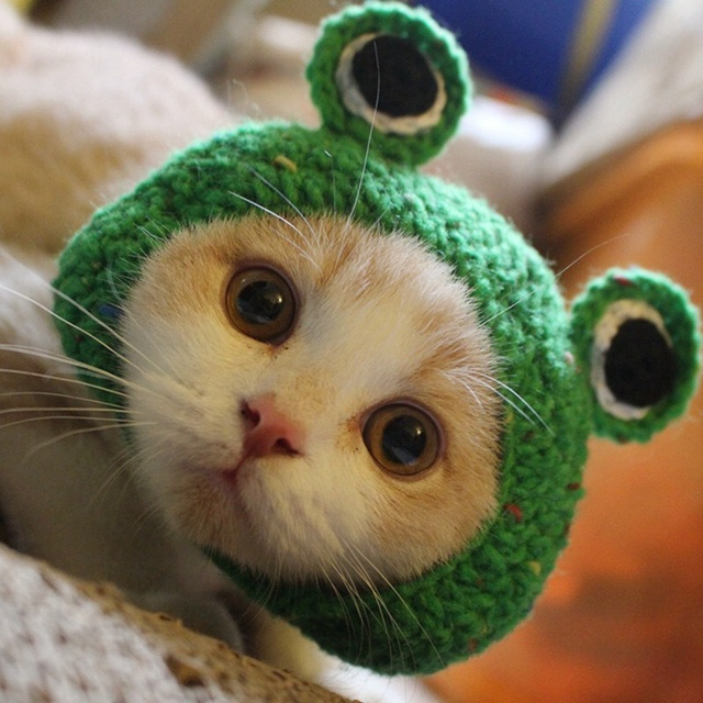Handmade Woven Pet Dog Hats Frog Shape Cat Hat Green Cute Hairband Dog Cap Dog Accessories