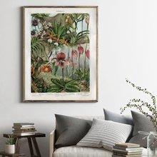 Винтажный постер Орхидея поздний период растительный Холст Печатный