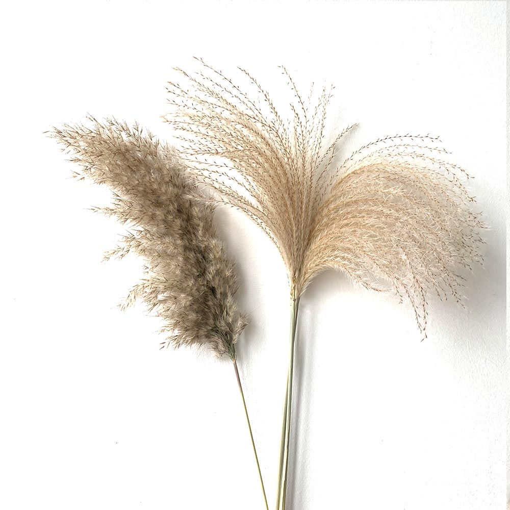 8pcs/10pcs/20 Pcs real dried small pampas grass wedding flower bunch natural plants decor home decor dried flowers Free shipping title=