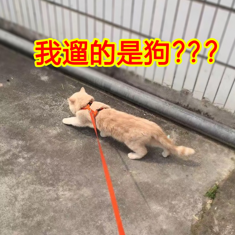 Cat With Hand Holding Rope Anti-Break Free Liu Mao Sheng Cat Walker Useful Product Cat Rope Cat Traction Dog Hand Holding Rope