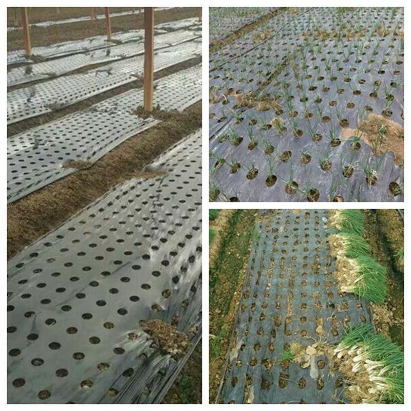 10 м черная 5 дырявая мульчирующая пленка PE пластиковая мульча 0,02 мм сельскохозяйственная растительная пленка защита от мороза сохраняет тепло контроль сорняков|Укрытие для растений|   | АлиЭкспресс