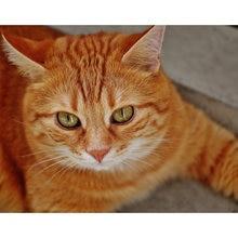 5d diy Алмазная картина полностью Скверная милая кошка алмазная