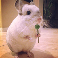Natural Grass Pet Hamster Grinding Teeth Stick Rabbit Chinchilla Guinea Pig Chewing Toy